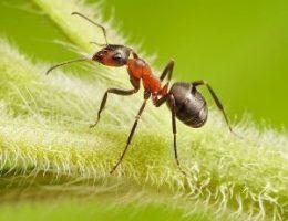Миниатюра к статье Выгнала муравьев с огорода за 2 часа. Сама удивилась!