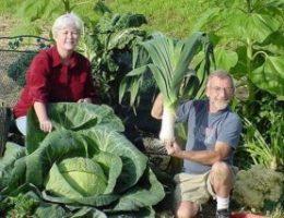Миниатюра к статье 6 удивительных огородных секретов