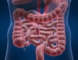 Миниатюра к статье Простые правила для хорошей работы кишечника
